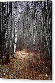 Acrylic Print featuring the photograph Walk In The Forest by Blair Wainman