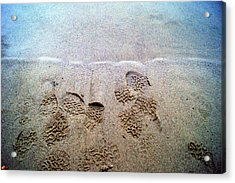 Walk In The Sand Acrylic Print by Tristan Bosworth