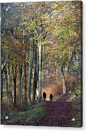 Walk In The Woods Acrylic Print by Nicola Butt