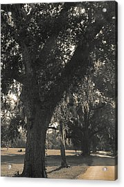 Acrylic Print featuring the photograph Walk Through The Oaks by Brian Wright