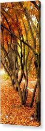 Walk With Me Acrylic Print