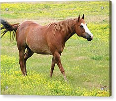 Walking Horse Acrylic Print by Wendy McKennon