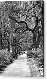 Walking Through The Park In Black And White Acrylic Print by Suzanne Gaff