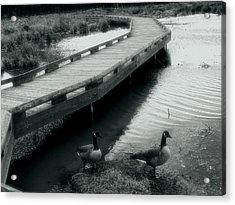 Walkway And Geese Acrylic Print