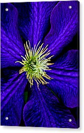 Wall Flower Acrylic Print by Frozen in Time Fine Art Photography