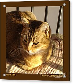 Warm Kitty-i Acrylic Print by Patricia Overmoyer
