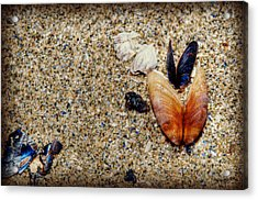 Washed Up Acrylic Print by Lisa Knechtel