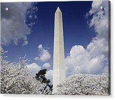 Washington Monument During The Cherry Acrylic Print by Everett