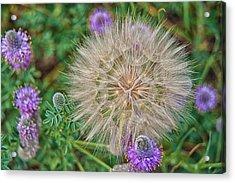 Washington Wildflowers Acrylic Print by Beverly Hanson