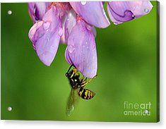 Wasp N Bloom Acrylic Print