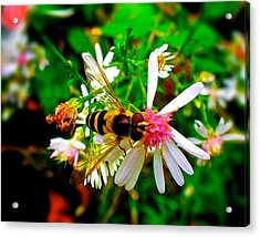 Wasp On Flower Acrylic Print