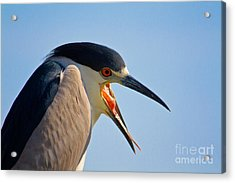 Wassup Acrylic Print by John Stanisich