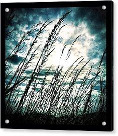 Wasteland Acrylic Print