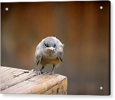 Watcha Lookin At.				 Acrylic Print by Margaret  Slaugh