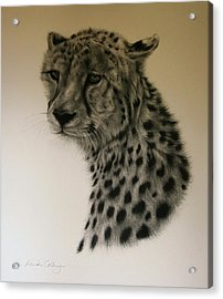 Watchful Acrylic Print by Lucinda Coldrey