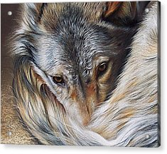 Watchful Rest -close-up Detail Acrylic Print by Elena Kolotusha