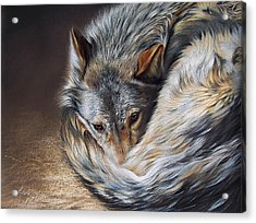 Watchful Rest Acrylic Print