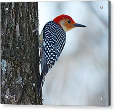 Acrylic Print featuring the photograph Watching by Brian Stevens