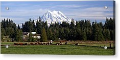 Watching Over The Herd Acrylic Print