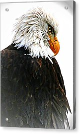 Watching Over You Acrylic Print by Carrie OBrien Sibley