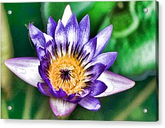 Water Color Lily Acrylic Print