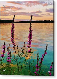 Water Colors Acrylic Print by Virginia Lei Jimenez