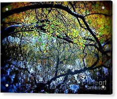 Water Cove Acrylic Print by Maria Scarfone
