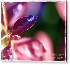 Water Drop Acrylic Print by Judi Bagwell