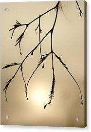 Water Droplets Acrylic Print by Jim Painter