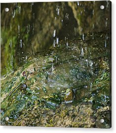 Water Droplets Acrylic Print by Joseph Shaffer
