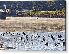 Water Fowl At Lake Wilhelmina Arkansas Acrylic Print by Douglas Barnard