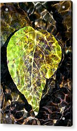 Acrylic Print featuring the photograph Water Leaf by Scott Holmes