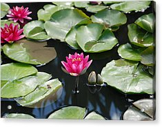 Acrylic Print featuring the photograph Water Lilies by Jennifer Ancker