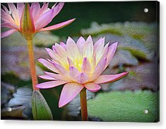Water Lilies Acrylic Print by Steven Michael