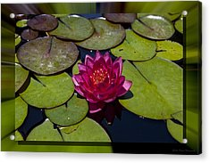 Water Lilly 4 Acrylic Print