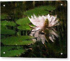 Water Lilly Acrylic Print by Heiko Mahr