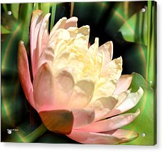 Water Lilly In Bloom Acrylic Print by Maria Urso