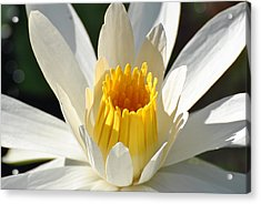 Acrylic Print featuring the photograph Water Lilly by Jodi Terracina