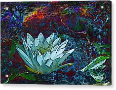 Water Lily Abstract Acrylic Print by Phyllis Denton