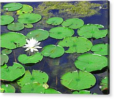 Acrylic Print featuring the photograph Water Lily by Clara Sue Beym