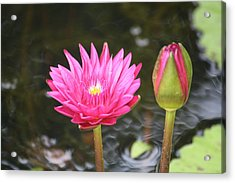 Acrylic Print featuring the photograph Water Lily by Donna  Smith