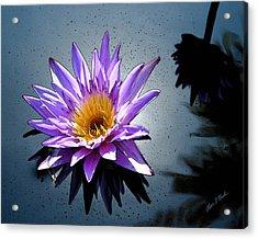 Water Lily Dream At Fairchild 2 Acrylic Print by Olivia Novak