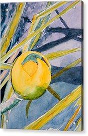 Water Lily Habitat Acrylic Print by Warren Thompson