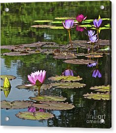 Water Lily Jewels Acrylic Print by Crystal Garner