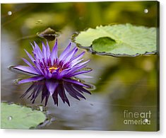 Water Lily Kissing The Water Acrylic Print by Sabrina L Ryan