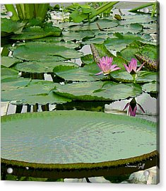 Water Lily Land IIi Acrylic Print by Suzanne Gaff