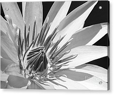 Water Lily Macro In Black And White Acrylic Print by Sabrina L Ryan