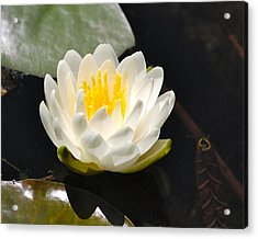 Acrylic Print featuring the photograph Water Lily by Mary McAvoy