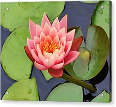 Water Lily Acrylic Print by Mary Zeman