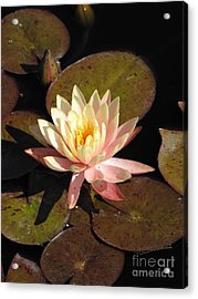 Acrylic Print featuring the photograph Water Lily by Michelle H